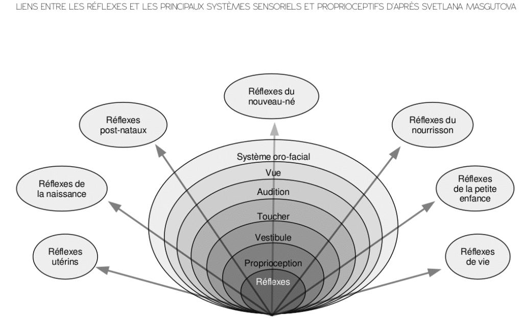 Les différents types de réflexes archaïques en lien avec les systèmes sensoriels